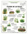 Deyrolle pour l'avenir - Fleurs de la ville - Poster 50x60.