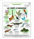 Deyrolle pour l'avenir - Forêt d'Amazonie - Poster 50x60.