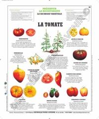 Deyrolle pour l'avenir - La tomate - Poster 50x60.