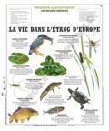 Deyrolle pour l'avenir - La vie dans l'étang d'Europe - Poster 50x60.