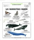 Deyrolle pour l'avenir - Mammifères marins - Poster 50x60.