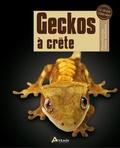 Adam Black - Geckos à crête - Rhacodactylus ciliatus, leachianus....