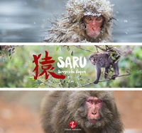 Corridashivernales.be Saru - Singes du Japon Image
