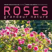 Goodtastepolice.fr Roses grandeur nature - La collection des roses Loubert Image
