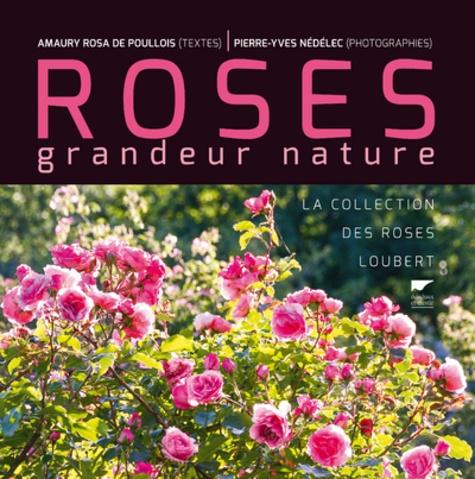 Roses grandeur nature. La collection des roses Loubert