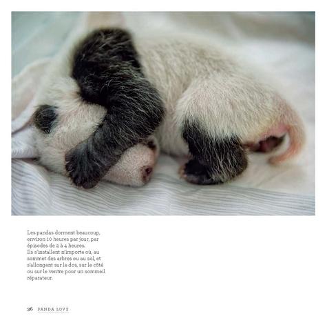 Panda love. Dans l'intimité des pandas