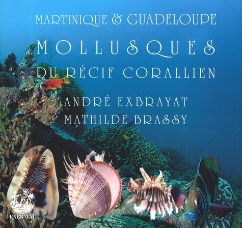 André Exbrayat et Mathilde Brassy - Mollusques du récif corallien.
