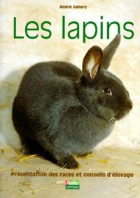 André Gahery - Les lapins.