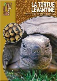 Coachingcorona.ch La tortue levantine Image