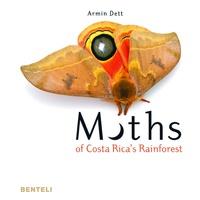 Accentsonline.fr Moths of Costa Rica's rainforest Image