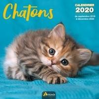 Artémis - Calendrier Chatons - De septembre 2019 à décembre 2020.