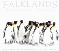 B d. Senechal - Falklands - manchots - penguins.