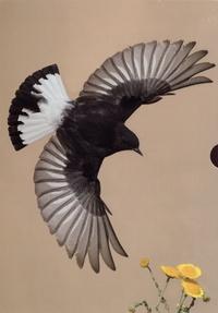 Hadoram Shirihai et Lars Svensson - Handbook of Western Palearctic Birds - 2 volumes : Passerines: Larks to Warblers ; Volume 2, Passerines: Flycatchers to Buntings.