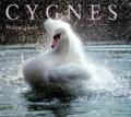 Cygnes / Philippe HENRY | HENRY, Philippe