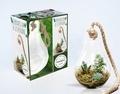 Baylor Chapman - Bubble terrarium - Contient : 1 terrarium en verre + 1 corde + 1 livre pour créer son terrarium.