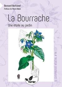 Bernard Bertrand - La bourrache, une étoile au jardin !.