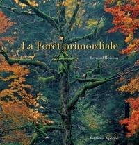 Ucareoutplacement.be La Forêt primordiale Image