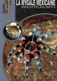 Coachingcorona.ch La mygale mexicaine - Brachypelma Smithi Image