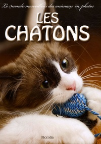 Deedr.fr Les chatons Image