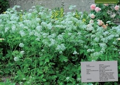 Mauvaises herbes, je vous aime !. Du bon usage des plantes sauvages au jardin et à la ville