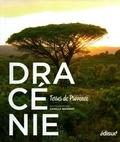 Camille Moirenc - Dracénie - Terres de Provence.