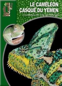 Carsten Schneider - Le caméléon casqué du Yémen - Chamaeleo calyptratus.