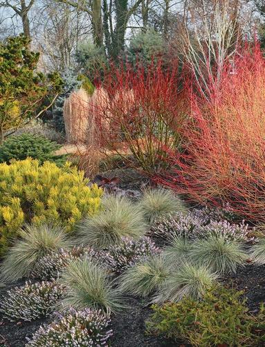 Jardins d'hiver. Une saison réinventée