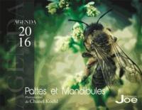 Chanel Koehl - Pattes et mandibules - Agenda.