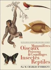 Charles d' Orbigny - Les Planches du Dictionnaire d'Histoire Naturelle - Coffret 5 volumes : Mammifères ; Oiseaux ; Poissons & coquillages ; Insectes ; Reptiles.
