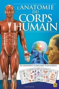 Chiara Naccarato - L'anatomie du corps humain - 24 grandes planches illustrées.