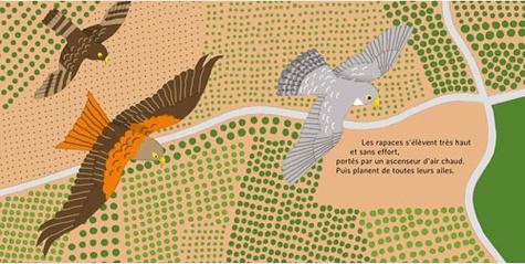 Les p'tits voyageurs. La migration des oiseaux