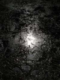 Claude Lévêque Hymne à la joie - Livre accompagné dun tirage photographique signé et numéroté (Edition limitée).pdf