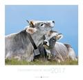 Collectif - Calendrier fous de vaches.