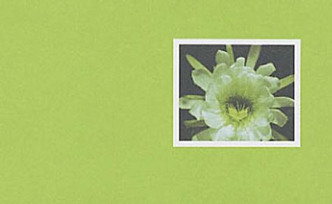 Collectif - Fleurs de cactées.