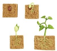 Collectif - La plante.