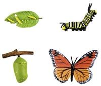 Collectif - Le papillon.