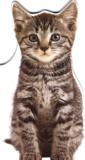 Collectif - Nougat, le chaton.