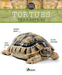 Collectif - Tortues terrestres.