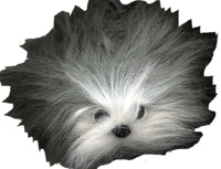 Collectif - Touffu, le chien de berger, chez le coiffeur.