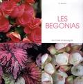 Daniela Beretta - Les bégonias.