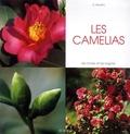 Daniela Beretta - Les camélias.