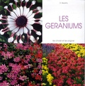 Daniela Beretta - Les géraniums.