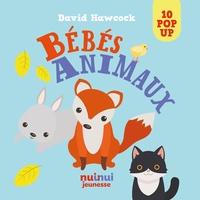 David Hawcock - Bébés animaux.