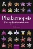 David Lafarge - Phalaenopsis - Une orchidée méconnue.