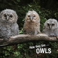 David Withrington et Ivan Esenko - How they live... Owls - Learn All There Is to Know About These Animals!.