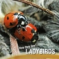 David Withrington et Ivan Esenko - How they live... Ladybirds - Learn All There Is to Know About These Animals!.