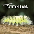 David Withrington et Ivan Esenko - How they live... Caterpillars - Learn All There Is to Know About These Animals!.