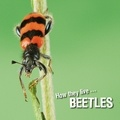 David Withrington et Ivan Esenko - How they live... Beetles - Learn All There Is to Know About These Animals!.