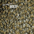 David Withrington et Ivan Esenko - How they live... Bees - Learn All There Is to Know About These Animals!.