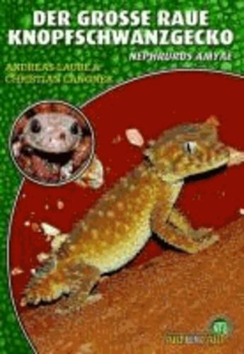 Der Große Raue Knopfschwanzgecko - Nephrurus amyae.